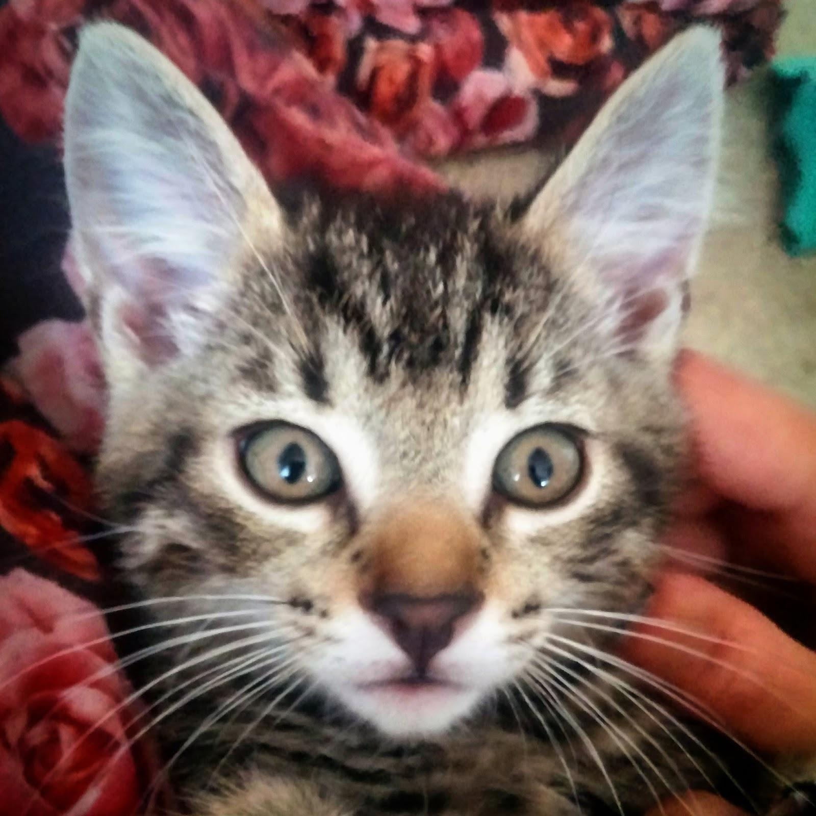 Kissanpentuja, söpöysvaroitus…