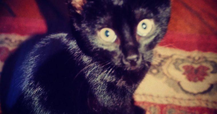 Kissa asiaa! Yllätyslahja jossa meidän musta pantteri Onni!