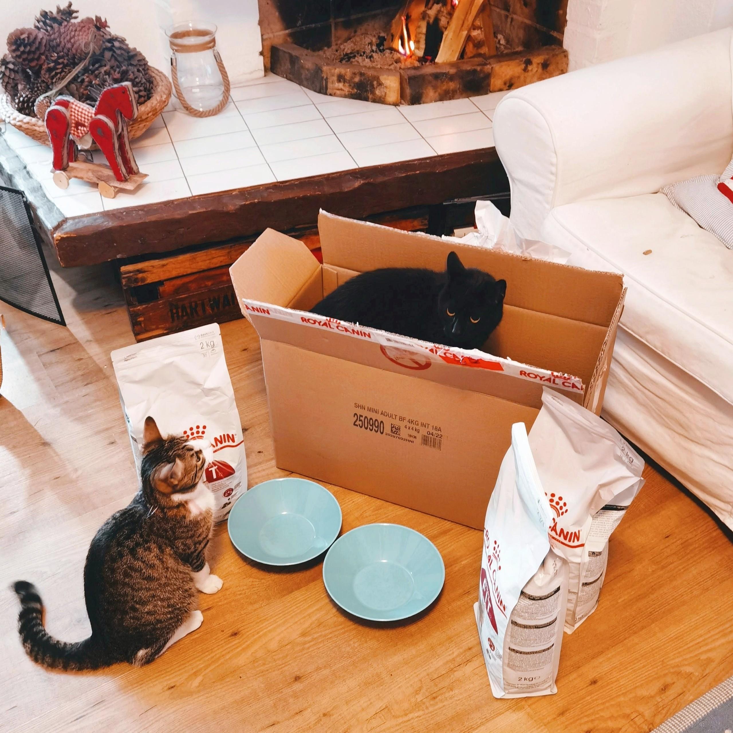 Kissa höpinöitä ja Royal Canin